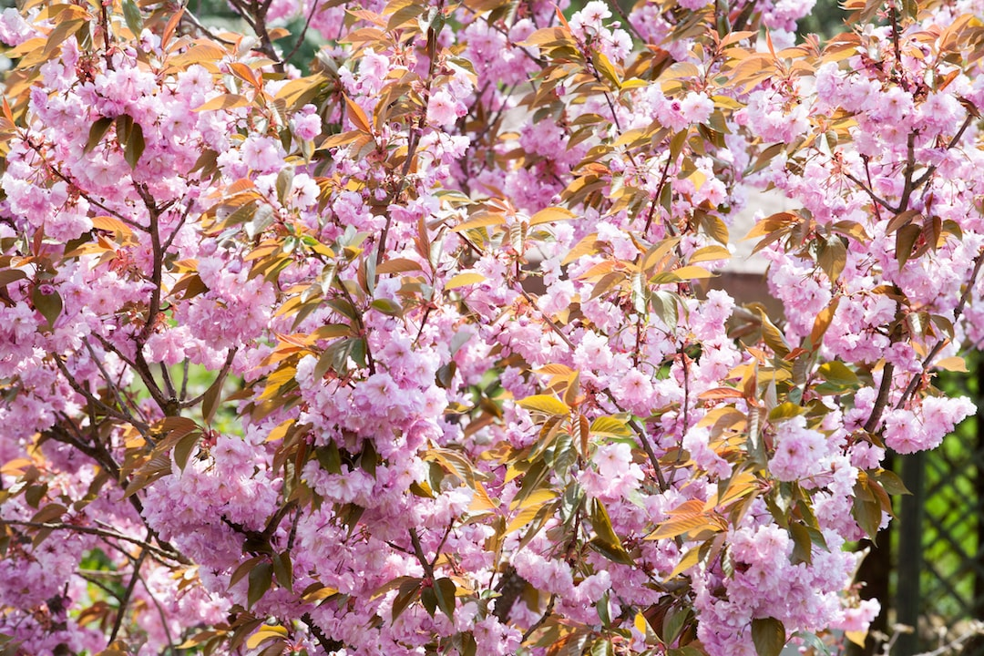 Der Frühling zeigt sich farbenfroh in seiner Blütezeit.